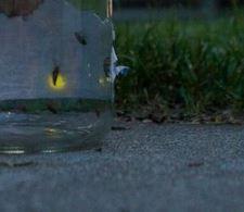firefly in jar